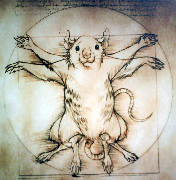 The_Vitruvian_Rat_by_GreenLabRat